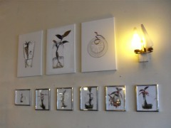 First batch of plant drawings on the wall